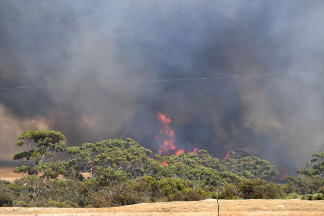 Ogień na Wyspie Kangura (PAP/EPA/DAVID MARIUZ)