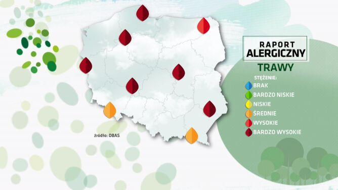 Raport alergiczny. <br />Bardzo wysokie stężenie pyłków traw